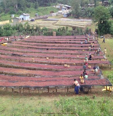 Ethiopia Yirgacheffe Aricha natural process