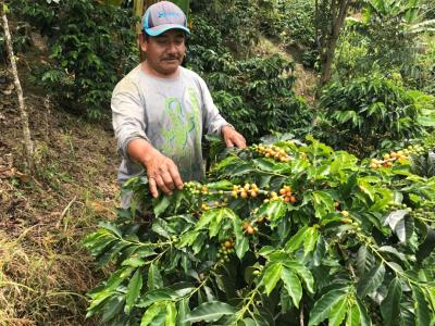 Colombia Yellow Bourbon Finca La Esmeralda