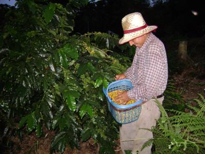 Bolivia Yanaloma 2, Eloy Mendoza.  Cert. Organic