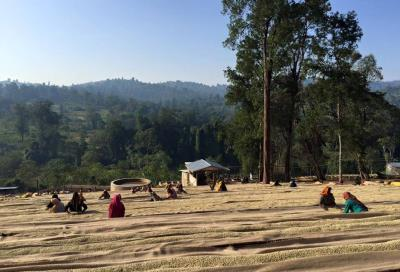 Ethiopia Guji Shakiso Danbi Uddo washed