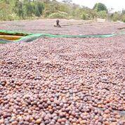 Ethiopia Hafursa Yirgacheffe Gr.1 natural process