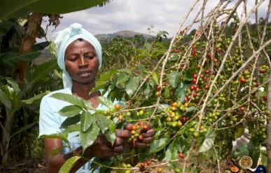 Rwanda Hingakawa Womens' Cooperative