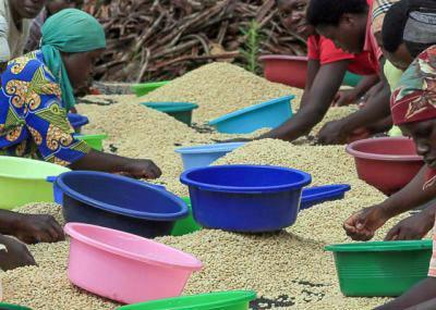 Rwanda Rulindo Tumba washed