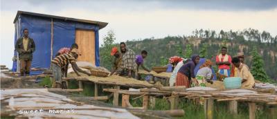 Burundi Kiganda Murambi Lot#2187 washed